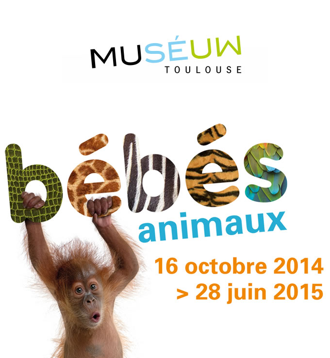 Le community management du Muséum de Toulouse avec Annabel Saint Paul