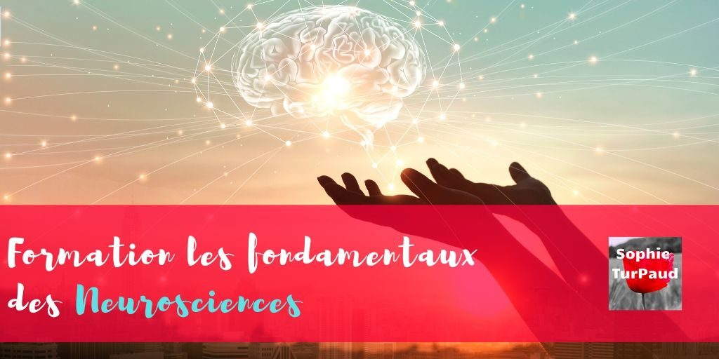 Formation les fondamentaux des neurosciences via @sophieturpaud #neurosciences #apprentissage