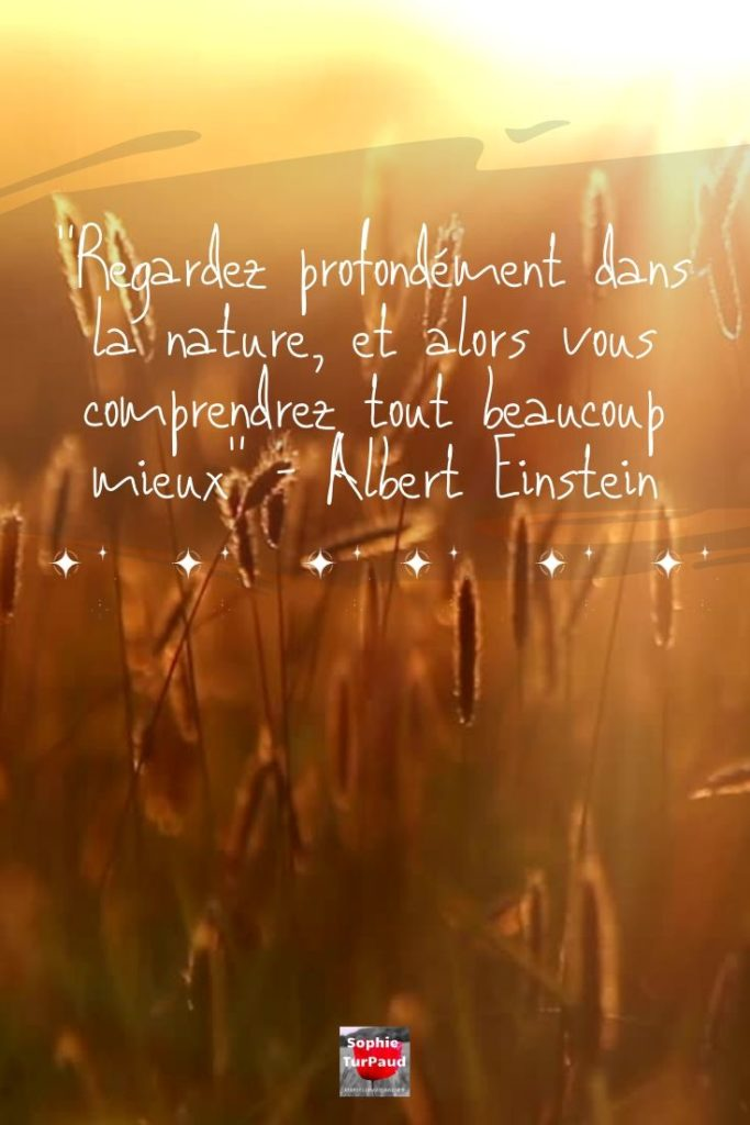 Citation albert Einstein via @sophieturpaud